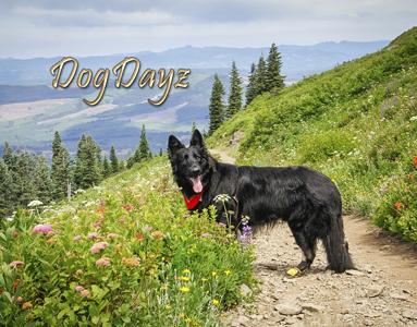 dogDayz 2020