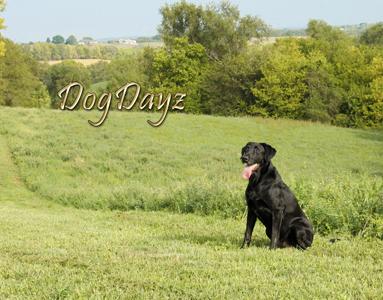 dogDayz 2021